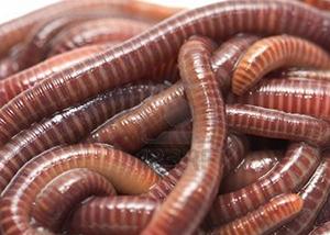 Earthworms copy2